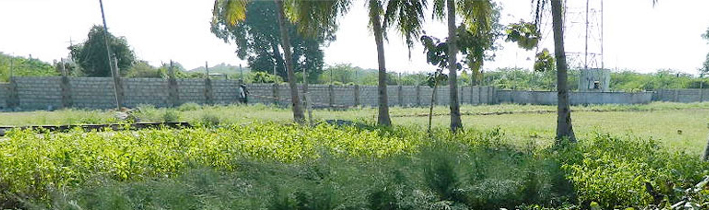 Sandalwood Project :: Shree Varsha Consultants